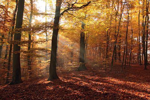Prozess um Körperverletzung: Sonnenstrahlen fallen durch das Laub von Bäumen in einem Wald.