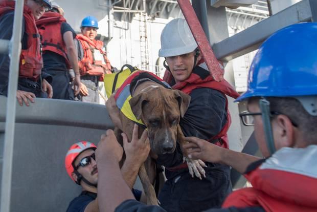 Marine-Angehörige helfen Zeus, einem der beiden Hunde der Schiffbrüchigen, an Bord des Rettungs-Schiffs.