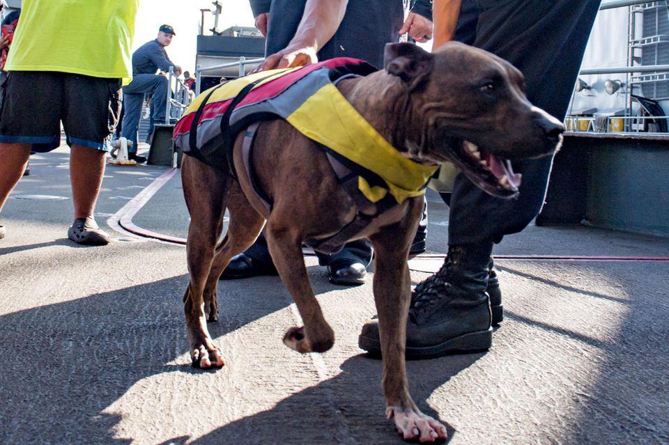 Ein Marine-Angehöriger kümmert sich um Hund Zeus. Links dahinter steht dessen Besitzerin Tasha Fuiaba.