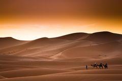 Wüste Kamelreiten