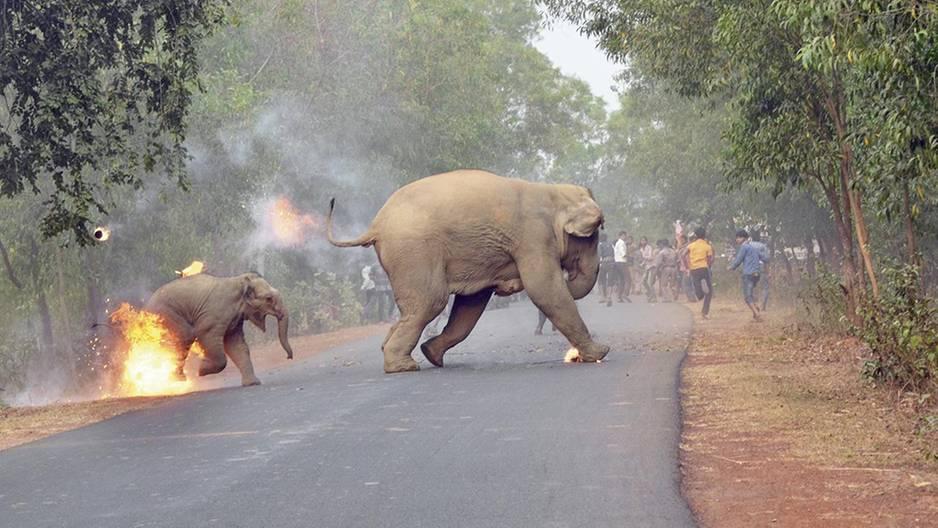 Brennendes Elefantenbaby zeigt traurige Wahrheit