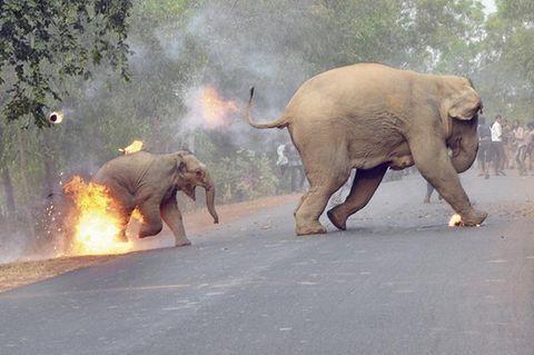"""""""Die Hölle ist hier"""": Dorfbewohner zünden Elefantenbaby an"""