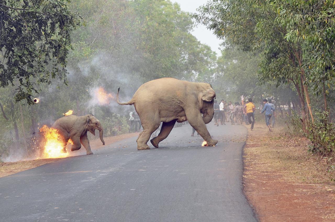 Elefant Angezündet Grausames Foto Geht Um Die Welt Brigittede