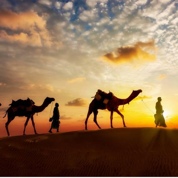 Wüsten-Aktivitäten: Kamele
