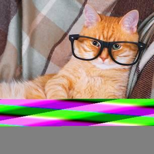 Katze, schlau