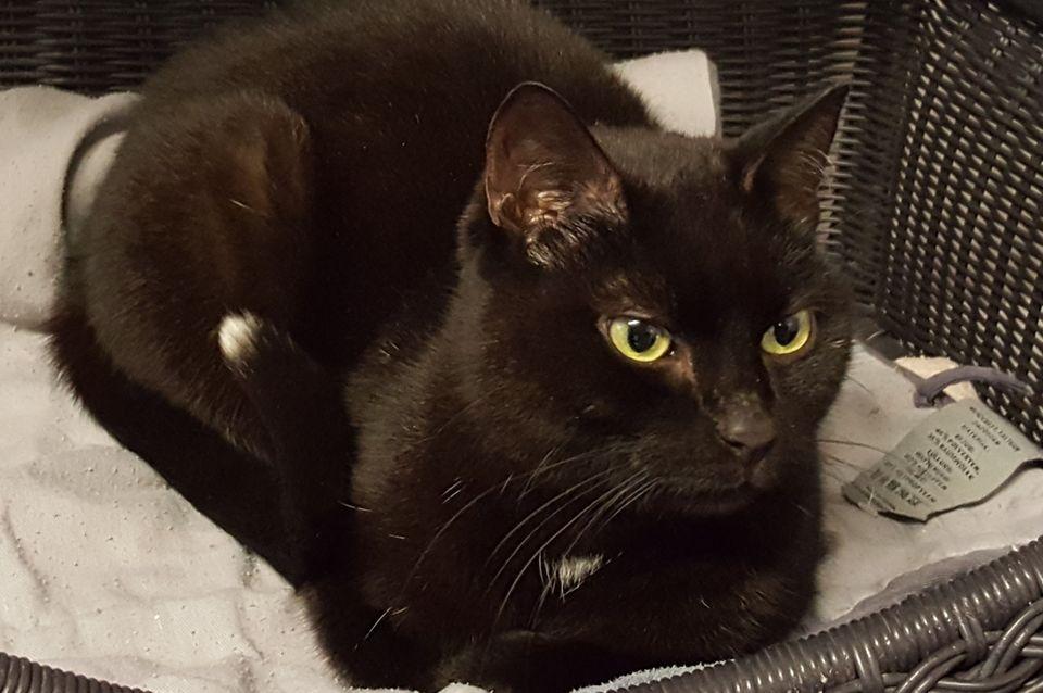 Unfassbar! Katze eine Woche in Schließfach am Bahnhof eingesperrt