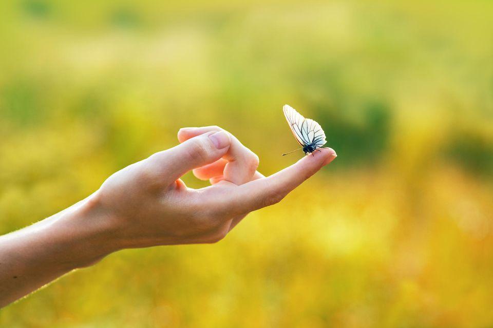 Zitate für einen Neuanfang: Hand mit Schmetterling