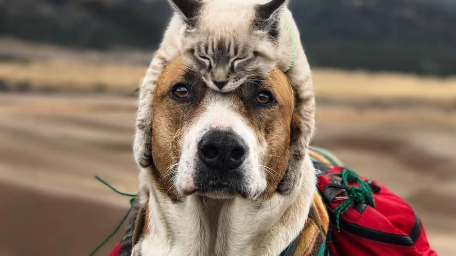 Hund und Katze auf großer Reise - diese Bilder versüßen unseren Tag! ❤️
