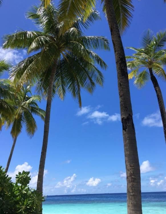 mirihi island resort eine perle auf den malediven. Black Bedroom Furniture Sets. Home Design Ideas