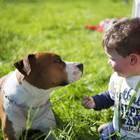 Hund und Kind (Symbolbild)