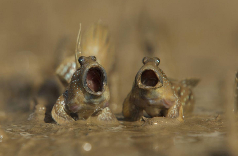 Zum Schießen! Das sind die lustigsten Tierbilder des Jahres ?
