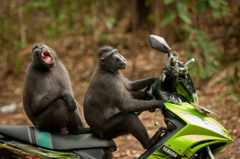 Zum Schießen! Das sind die lustigsten Tierbilder des Jahres 😂