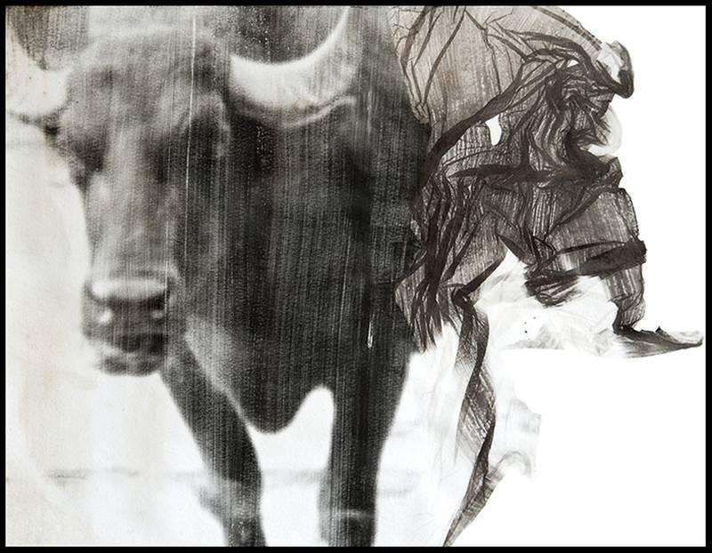 """""""Stierkampf. Studie"""", 30 x 24 cm, analoge s-w Fotografie, Fotoemulsion auf Aquarellpapier, Handabzug, Unikat, 2016"""