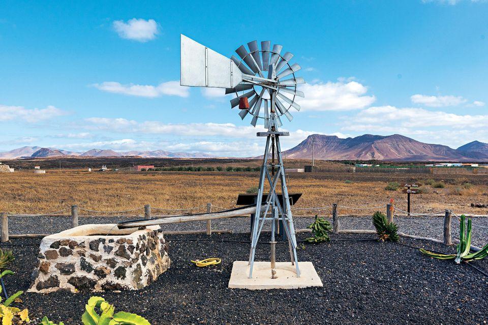 "Fuerteventura: Finca ""Verdeaurora"""