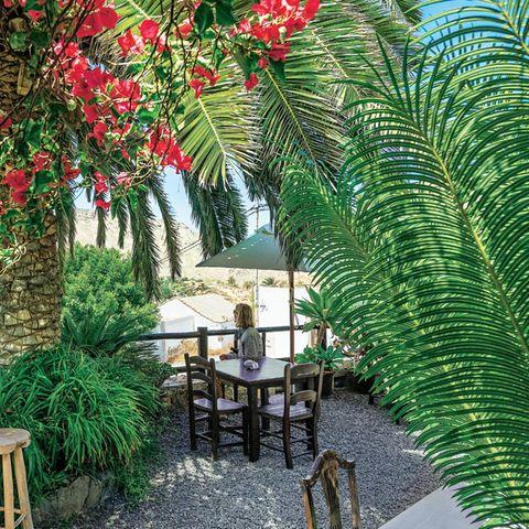 "Fuerteventura Reisetipps: Garten der ""Casa de la Naturaleza"""