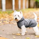 Brauchen Hunde Wintermäntel: Kleiner Hund ruht sich im Mantel aus