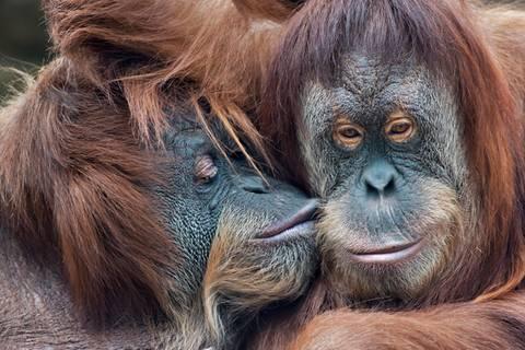Küssen hilft! Warum wir alle mehr knutschen sollten