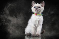 Rauchen und Haustiere: Katze guckt ängstlich aus einer Rauchwolke
