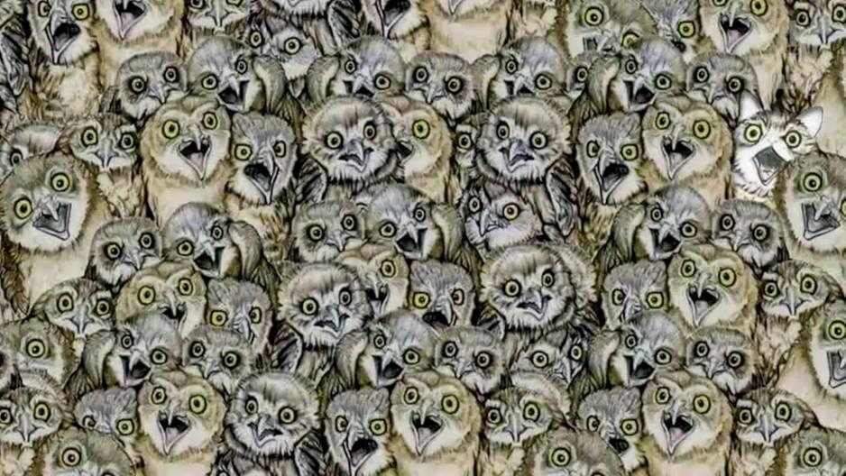 Suchbild: Eine Gruppe von Eulen, in denen eine Katze versteckt ist