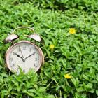 Sommerzeit: Wecker auf grüner Wiese