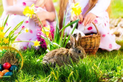 Osterbräuche: Ostereiersuche mit Kindern
