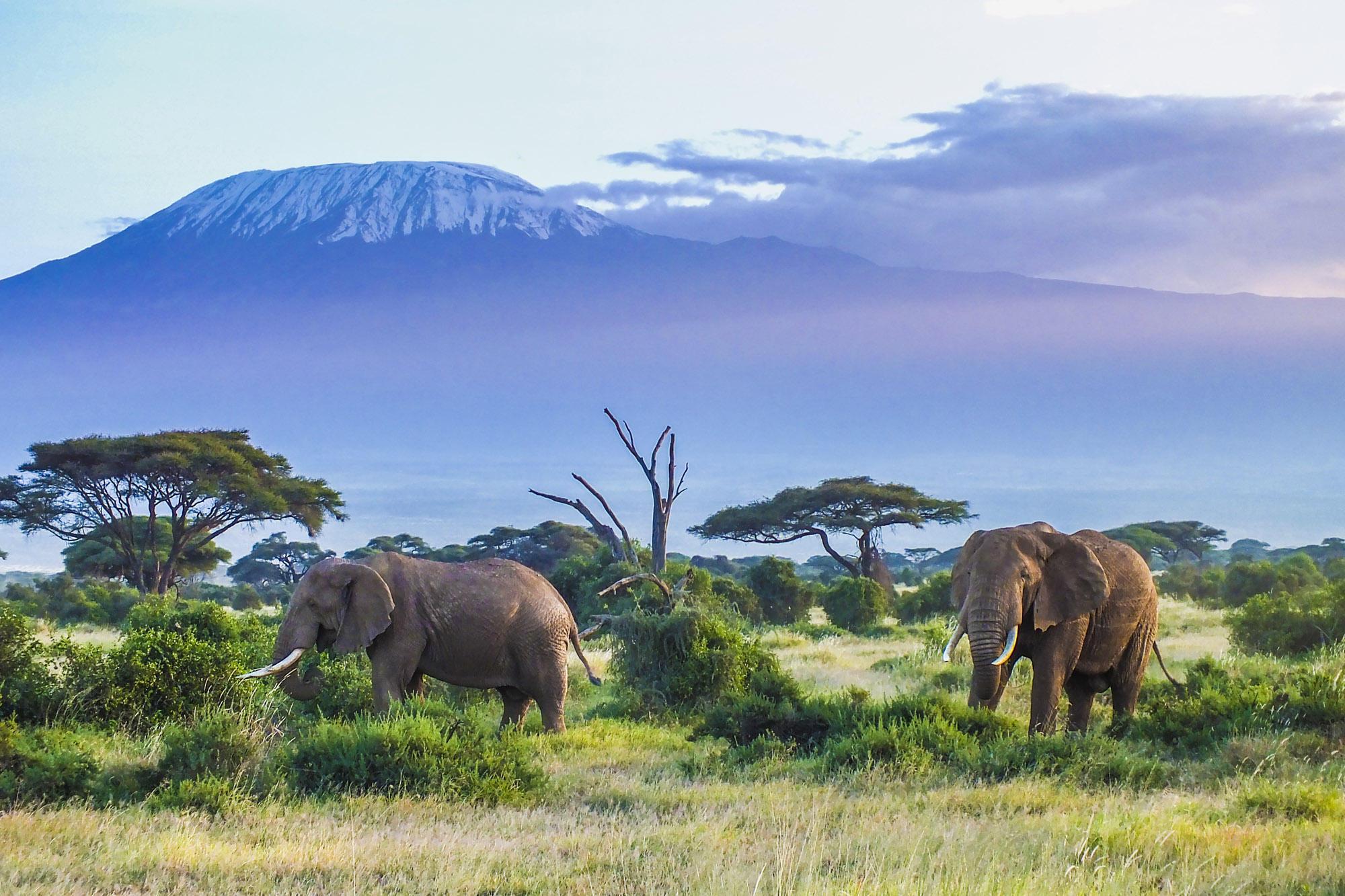 Kenia: Die schönsten Safari-Lodges | BRIGITTE.de