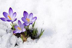 Neuer Kälte-Rekord - aber bald gibt der Frühling Vollgas!