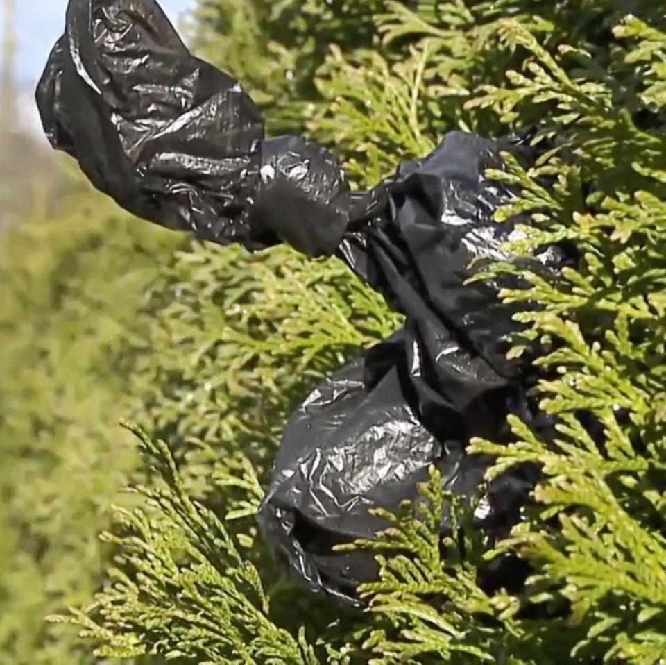Hundekot: Schwarzer Beutel steckt in Gebüsch