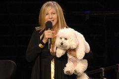 Barbra Streisand hat ihren Hund geklont - gleich zweimal!