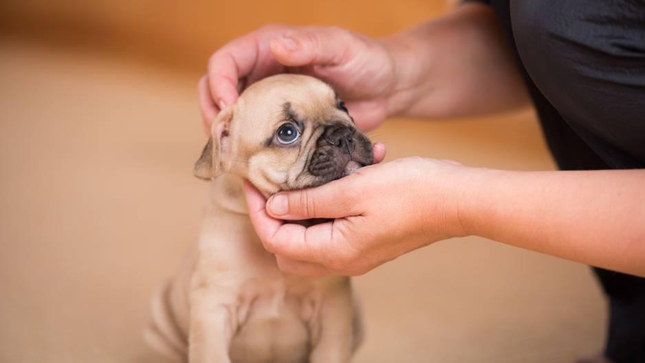 Hundewelpe wird am Kopf gekrault