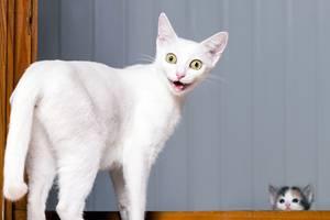 Katzen sind bekanntlich nicht mehr ganz bei Trost.