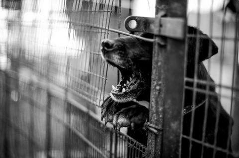 Tragisch: Mutter und Sohn vom eigenen Hund getötet