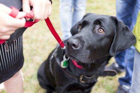 Tierschützer fordern Hundeführerschein für ALLE Halter