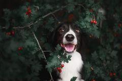 Ein süßer Hund im Brombeerbusch