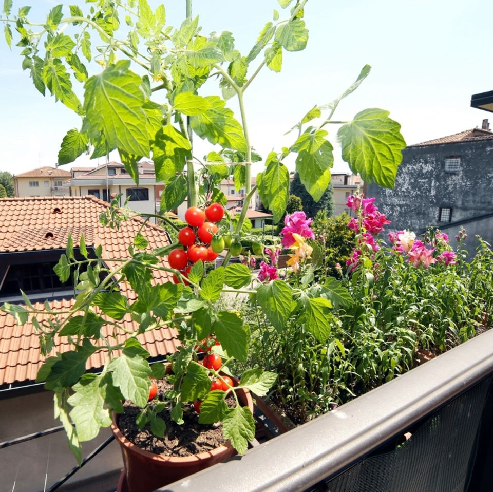 Urban Farming: Gemüse auf dem Balkon