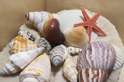 Urlaubs-Flair für dein Zuhause: Muscheln 🌊