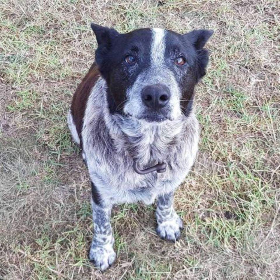 Familienhund Max rettet ausgerissenem Mädchen (3) das Leben
