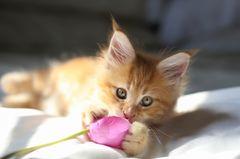 Darum werfen Katzen alles runter: Katzenbaby blickt in die Kamera
