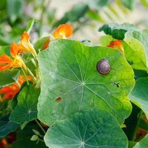 Schnecken bekämpfen: Schnecke im Garten