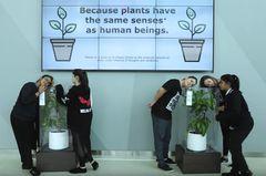 Diese Pflanze wird 30 Tage lang gemobbt und beleidigt – und DAS passiert!