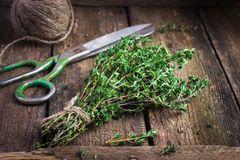 Thymian pflanzen: Thymianzweig frisch gepflückt