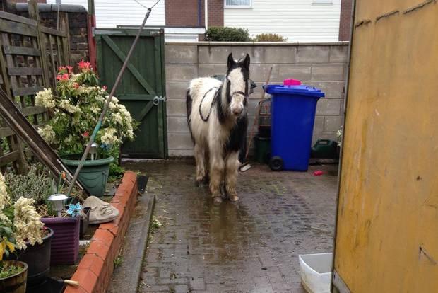 Ein Pferd auf einer Terrasse