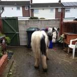 Das Pferd Mr Melvin Andrews in Omas Hinterhof