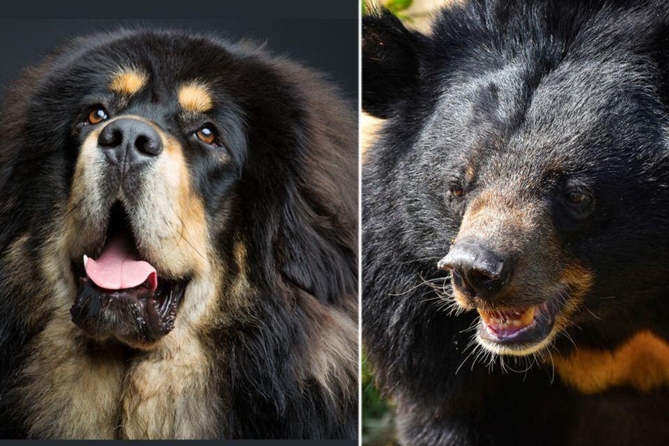 Hundewelpe entpuppt sich als Bär