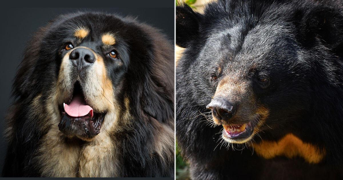 Haushund Entpuppt Sich Als Schwarzbär Brigittede