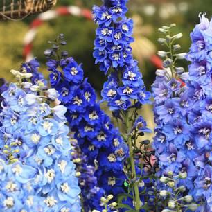 Fur Balkon Und Garten Blaue Blumen Und Pflanzen Brigitte De