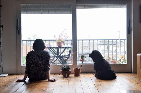 Trennungsphasen: Eine Frau sitzt allein mit ihrem Hunde und zwei Zimmerpflanzen in der Wohnung und schaut nach draußen