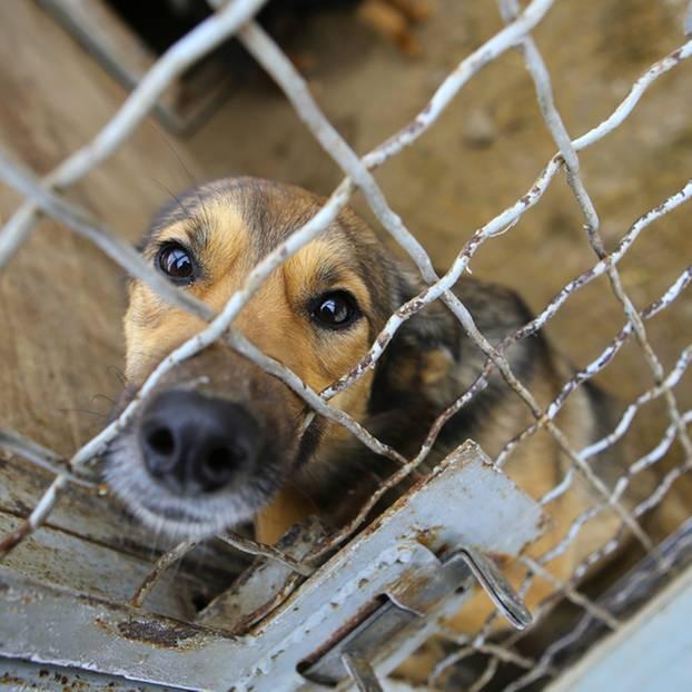 südkorea gericht verbietet schlachten von hunden