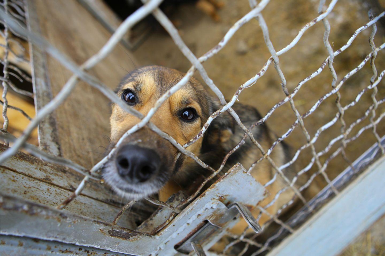 Endlich: Dieses Land verbietet das Schlachten von Hunden
