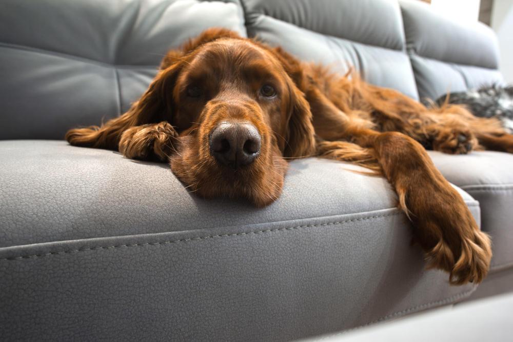 Hundehaare entfernen die besten tipps brigitte